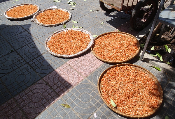 Trays of shrimps drying in the sun