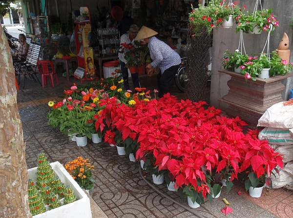 A flower stall selling poinsettias