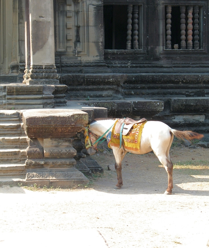 White horse in front of Angor Wat