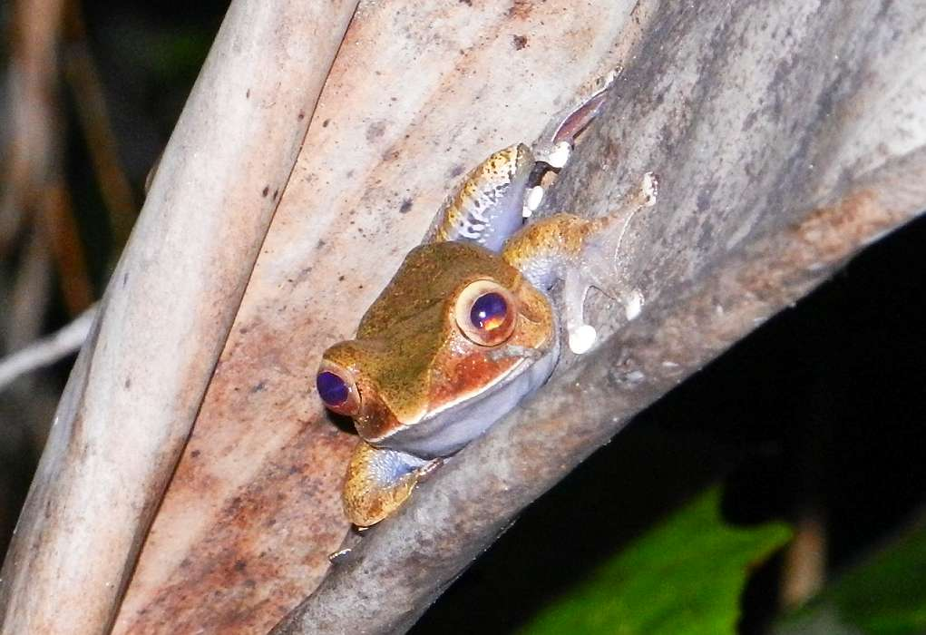 Frog in bromeliad.