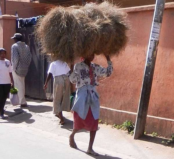 Woman carrying a bale of hay on her head.