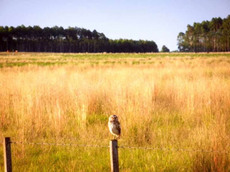 Owl basking in the setting sun in the Esquina estancia.