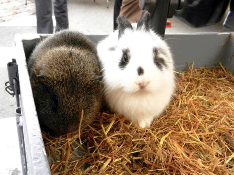 Bunny rabbits at Libourne market