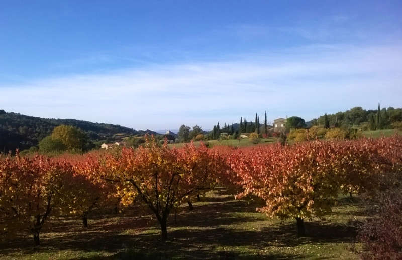 The Provence countryside aglow under in the bright autumn sky.