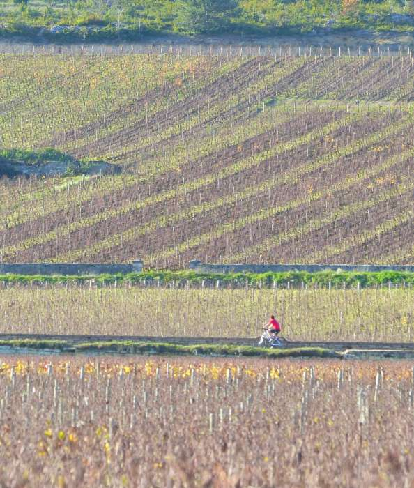 A lone cyclist in the Burgundy countryside