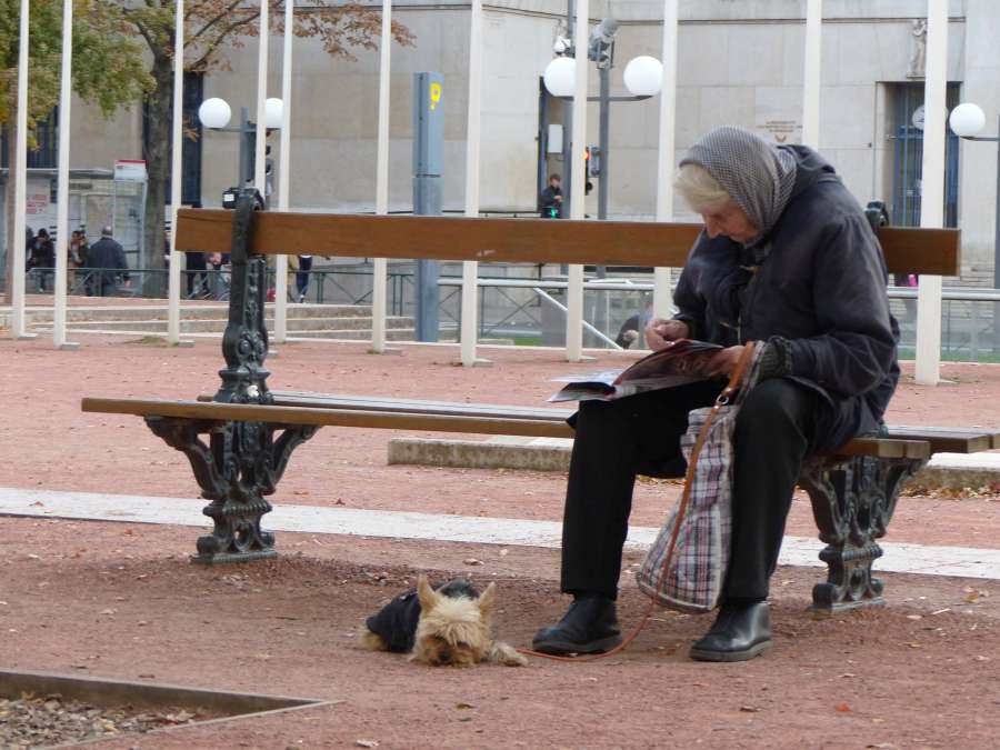 Old woman on park bench with small dog