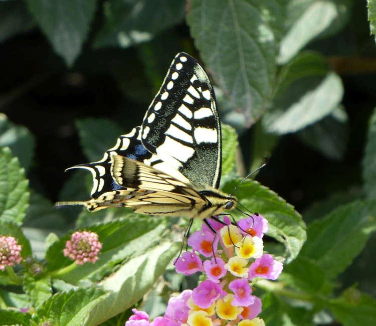 Butterfly closeup in Katakolon.