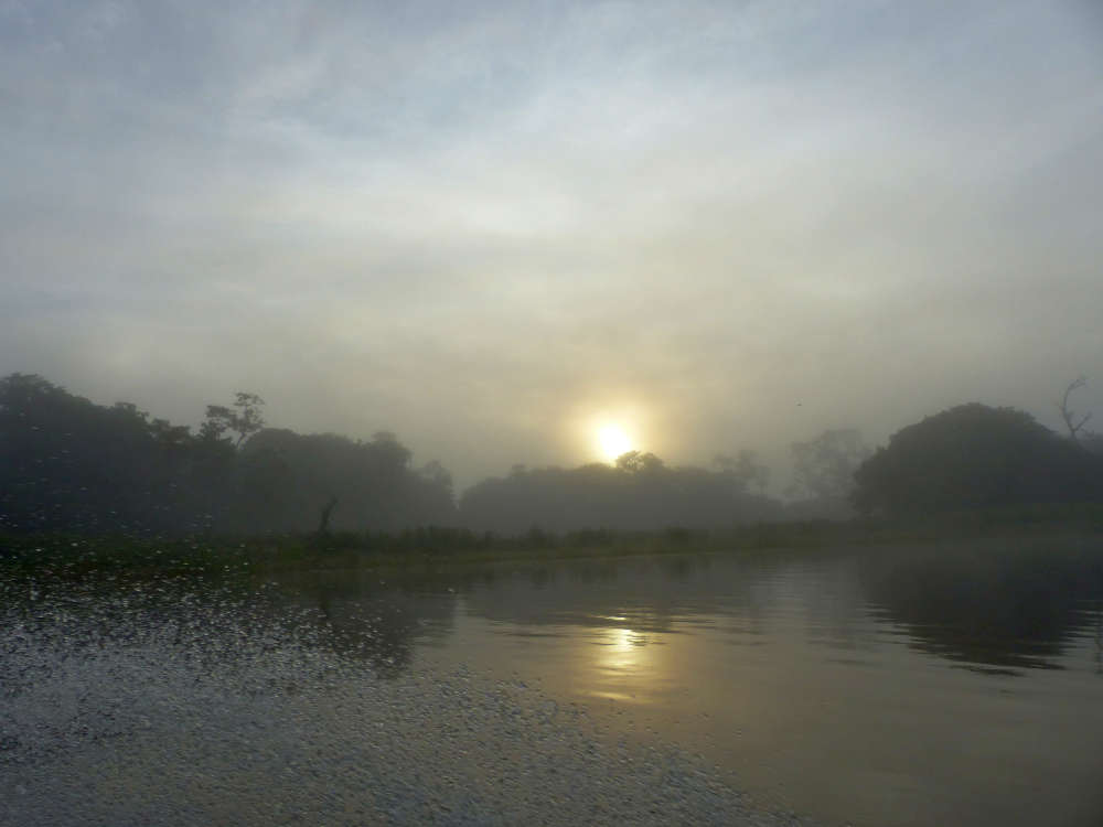 Amazon Pacaya-Samiria National Reserve morning skiff excursion