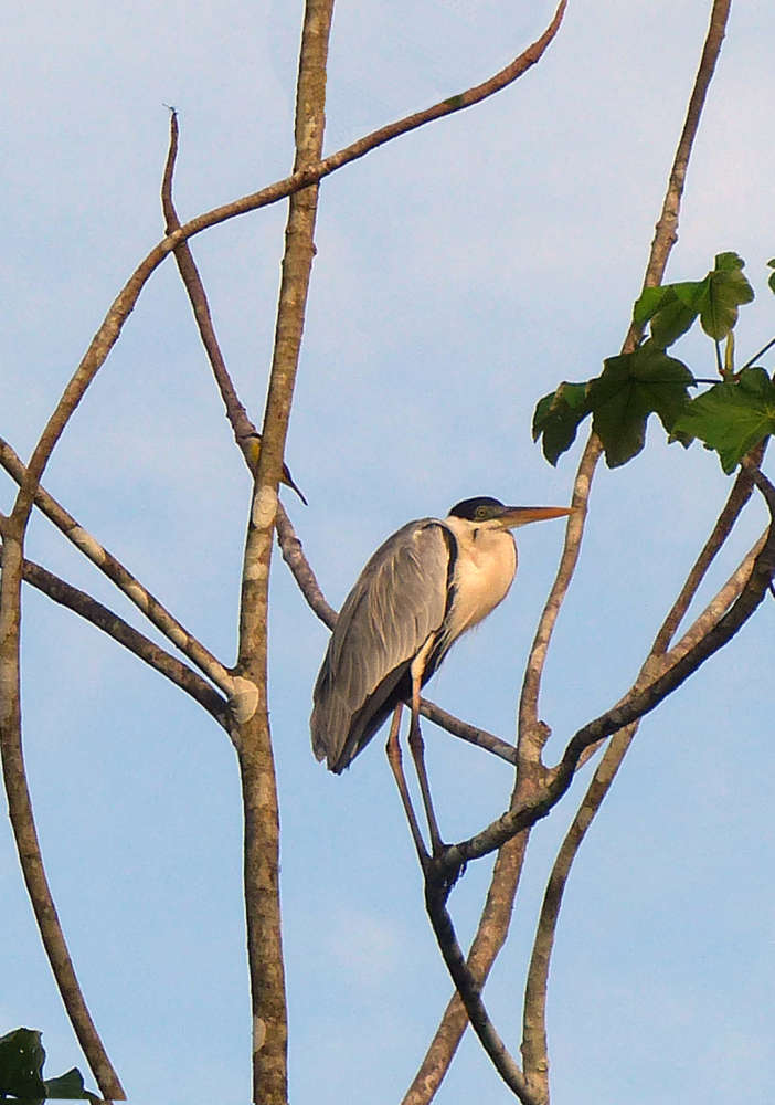 Heron basking in the sun
