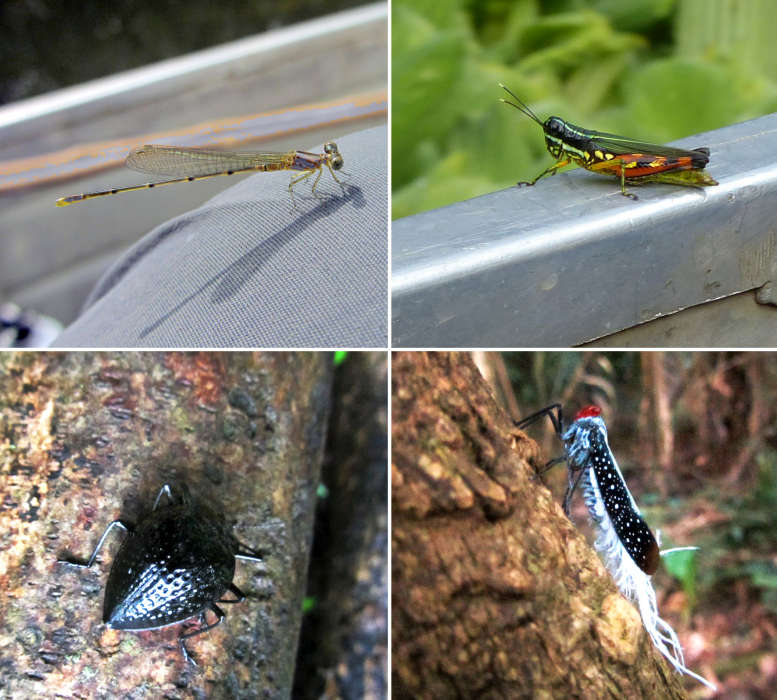 A collage of 4 unusual looking insects