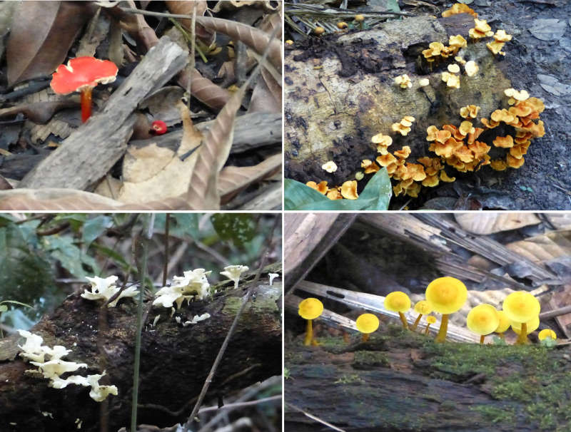 4 varieties of mushrooms on the forest floor.